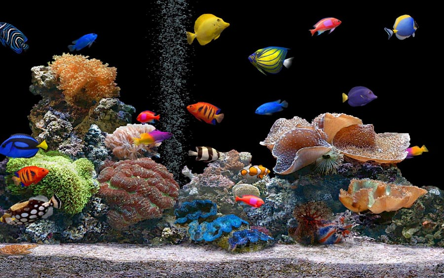 Smart fish tank used by hackers to steal data from a casino